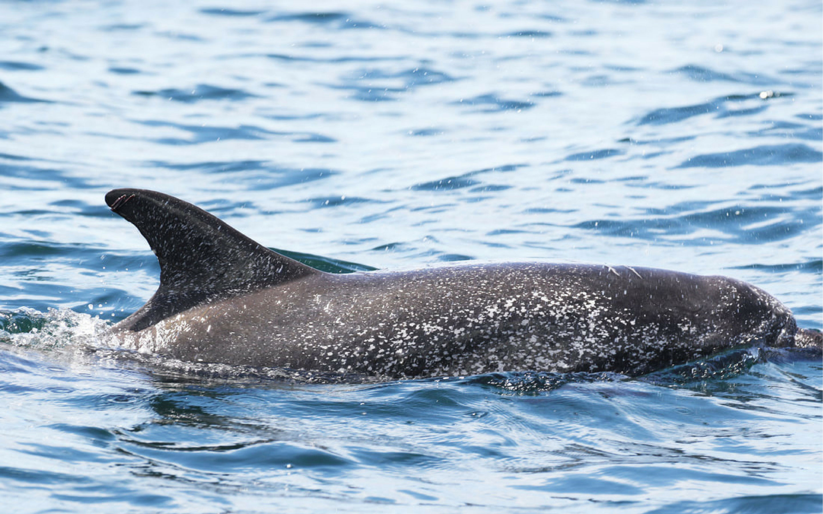 Will dolphins recover from the deepwater horizon oil spill?
