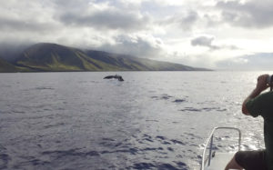 Estimating the hearing range of humpback whales in their natural habitat