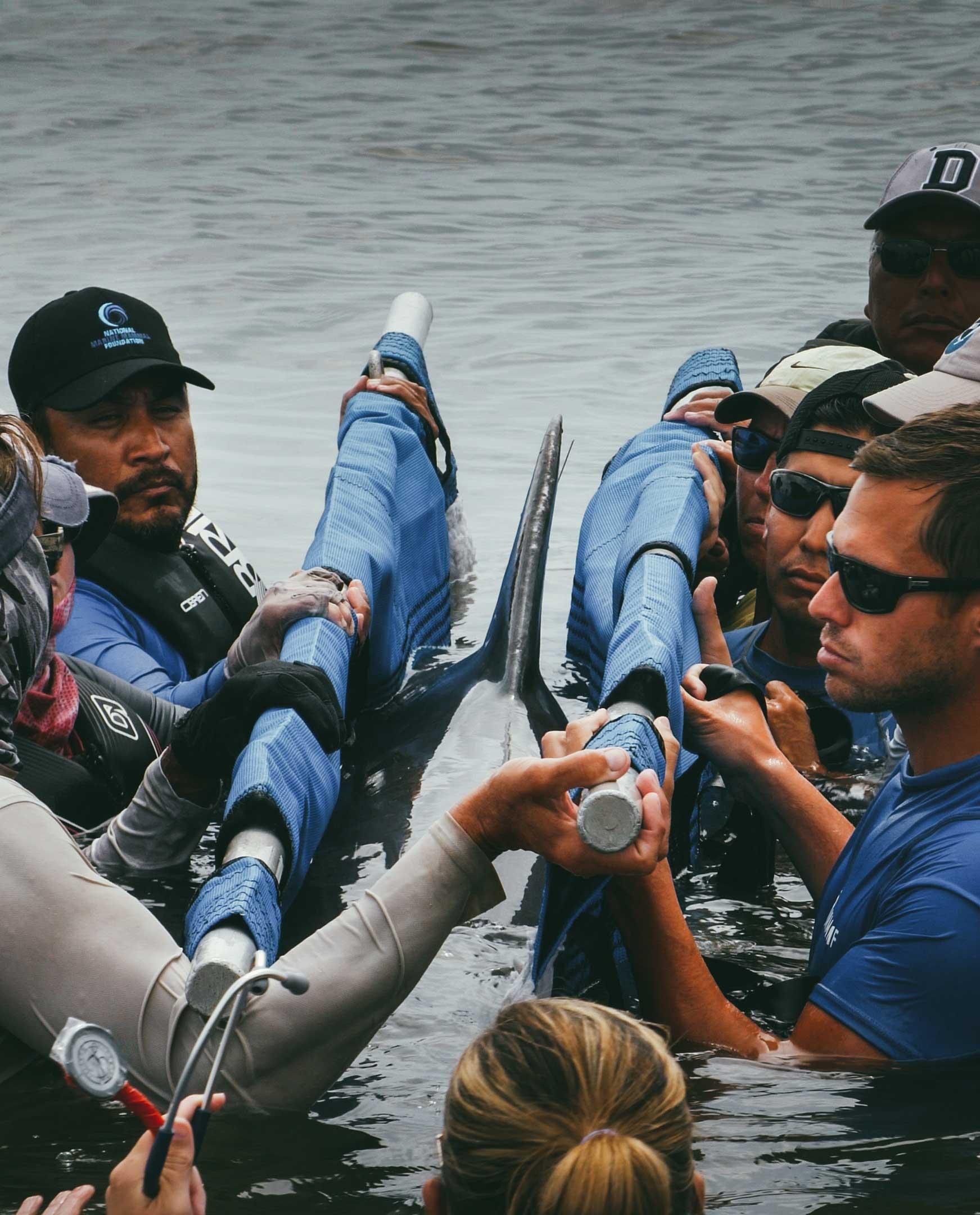 Wild dolphin health assessment