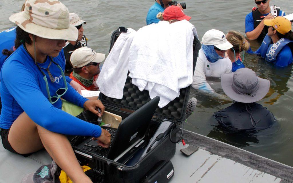 NMMF Ultrasound on wild dolphin -MMPA/ESA Permit No 18786-1