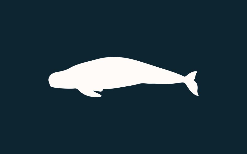 NMMF - Yangtze Finless Porpoise
