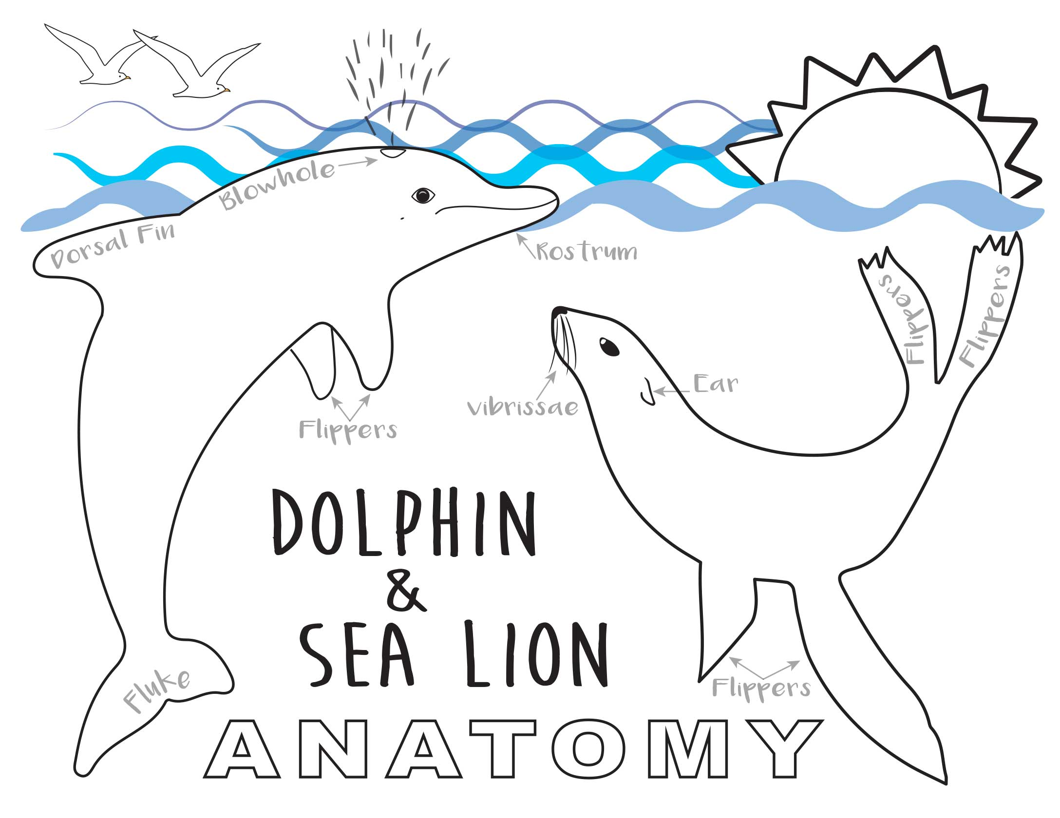 DolphinSeaLion_ColoringSheet