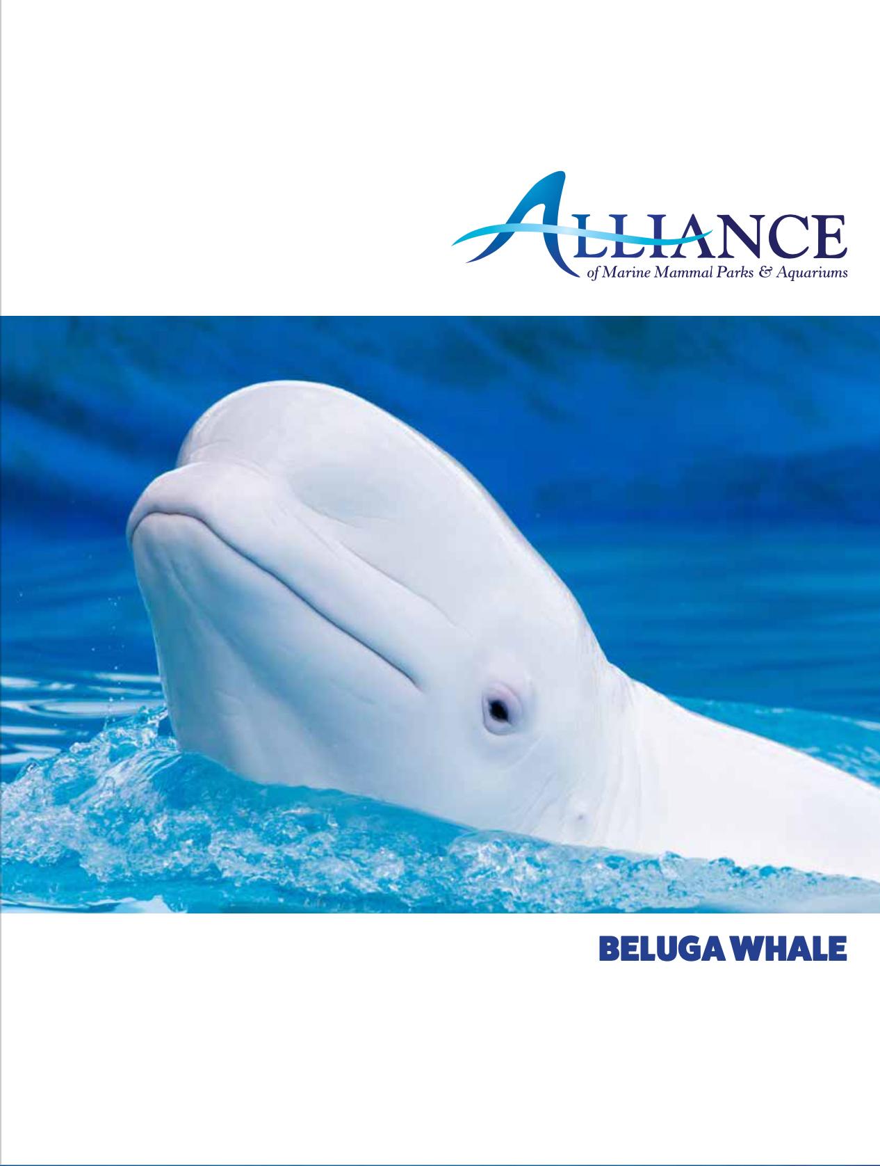 Alliance Fact Sheet - Beluga